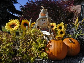 Halloweenské dekorace pro dům a byt - FreeImages
