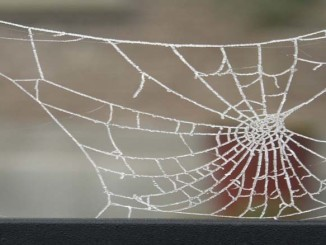 halloween-pavučina-2
