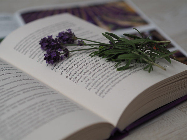 Kniha Levandulové noci