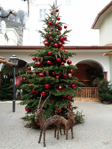 Vánoční strom na Sternadvent