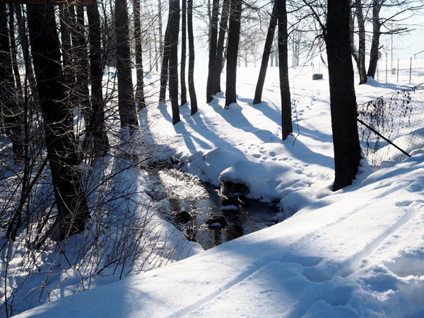 Příroda v zimě na Lipně