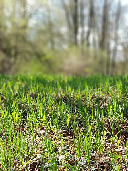 Jarní tráva
