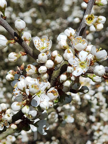 Květy ve Škvorecká obora