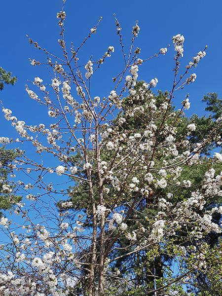 Obloha na jaře